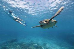 Pic: Tourism Queensland