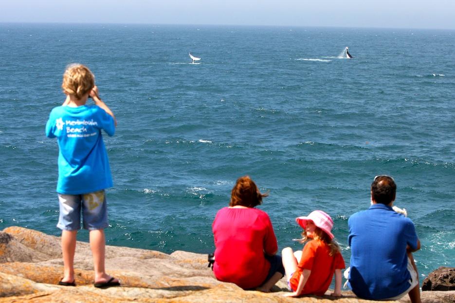 Whales at Merimbula