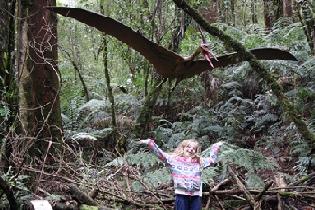 Otway Treetop walk adventour