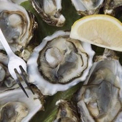 Bluff oysters are arguably the best oysters in the world