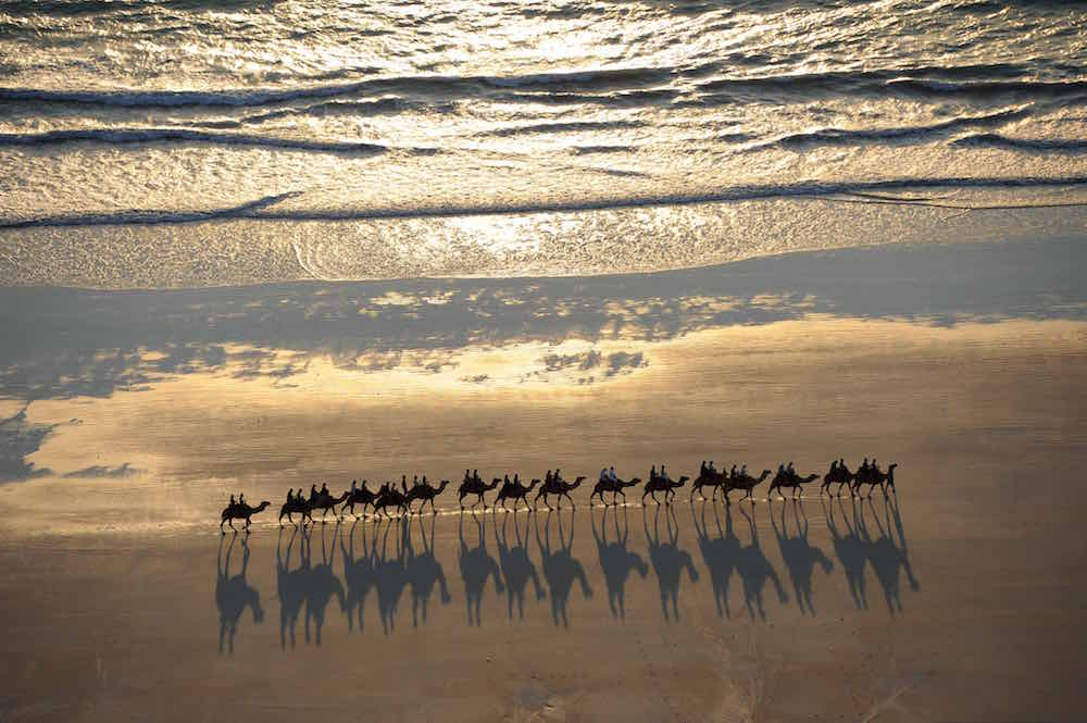 Camels Broome's Cable Beach. Photo James Morgan