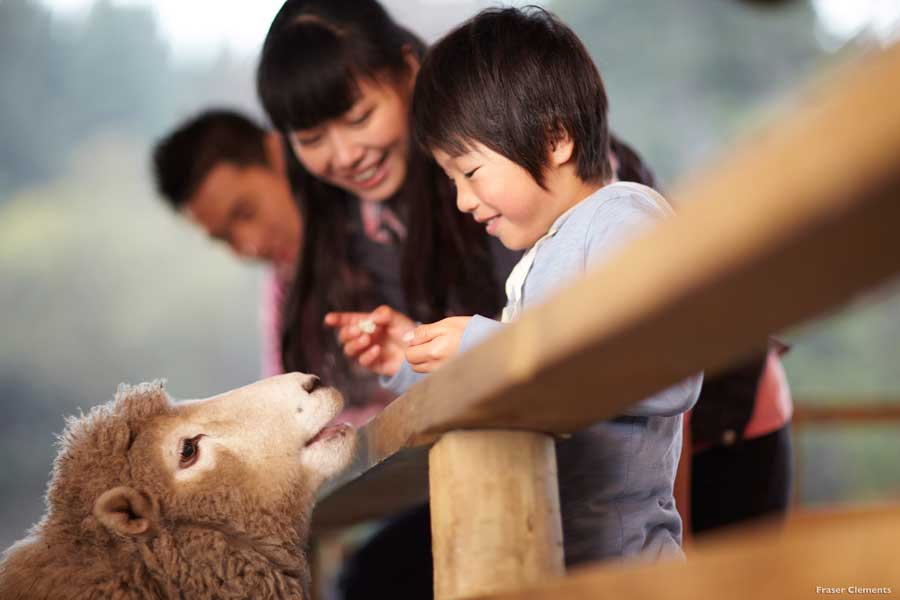 Kid Petting Sheep
