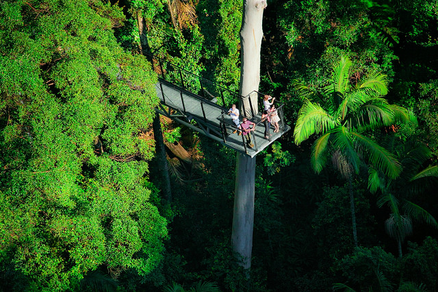 Skywalking in the Tamborine Rainforest