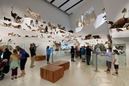 melbourne-museum2