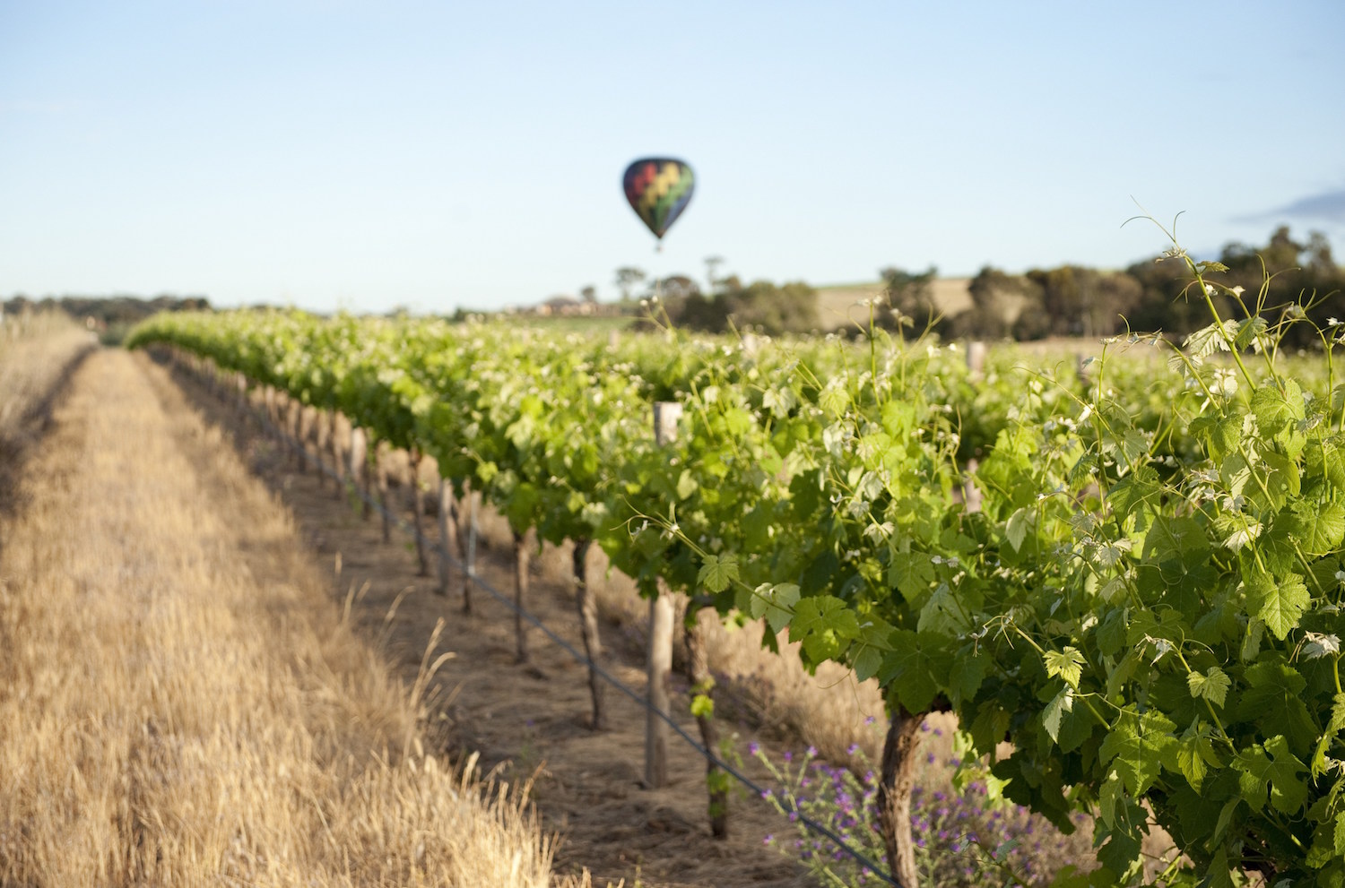 Barossa Valley balloon