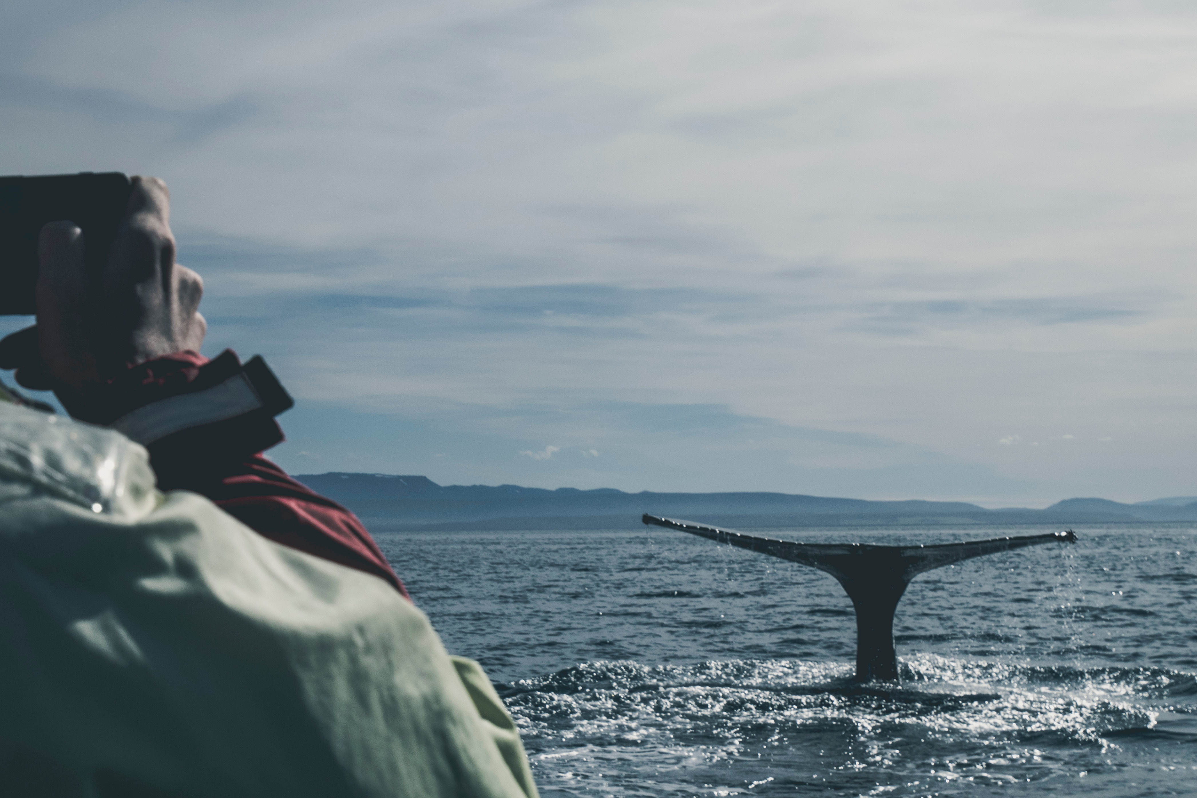 Australia's Best Places for Whale Watching Season