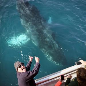 Whale watching off the Gippsland Coast