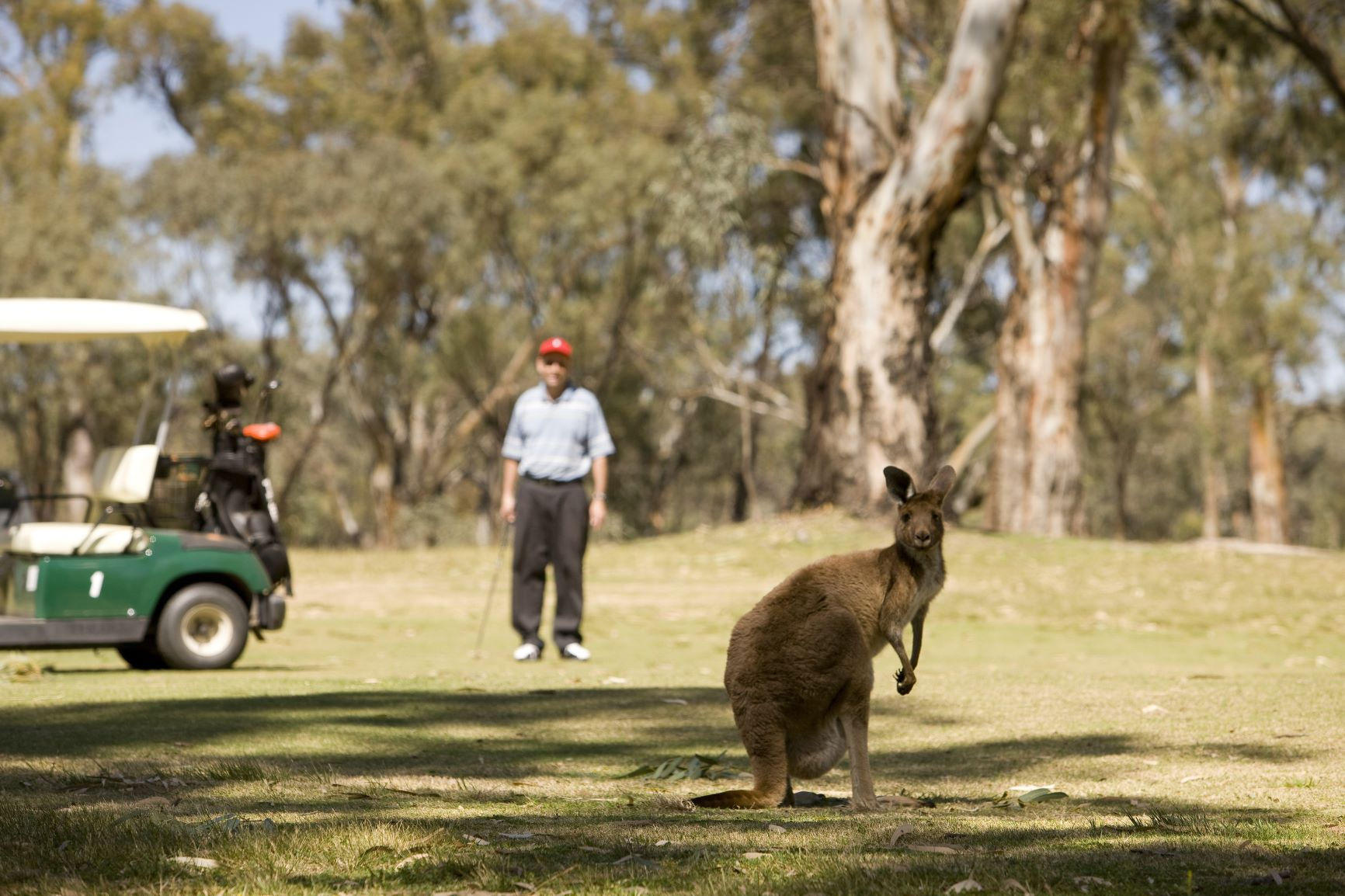 Golf Safari – Victoria, Australia