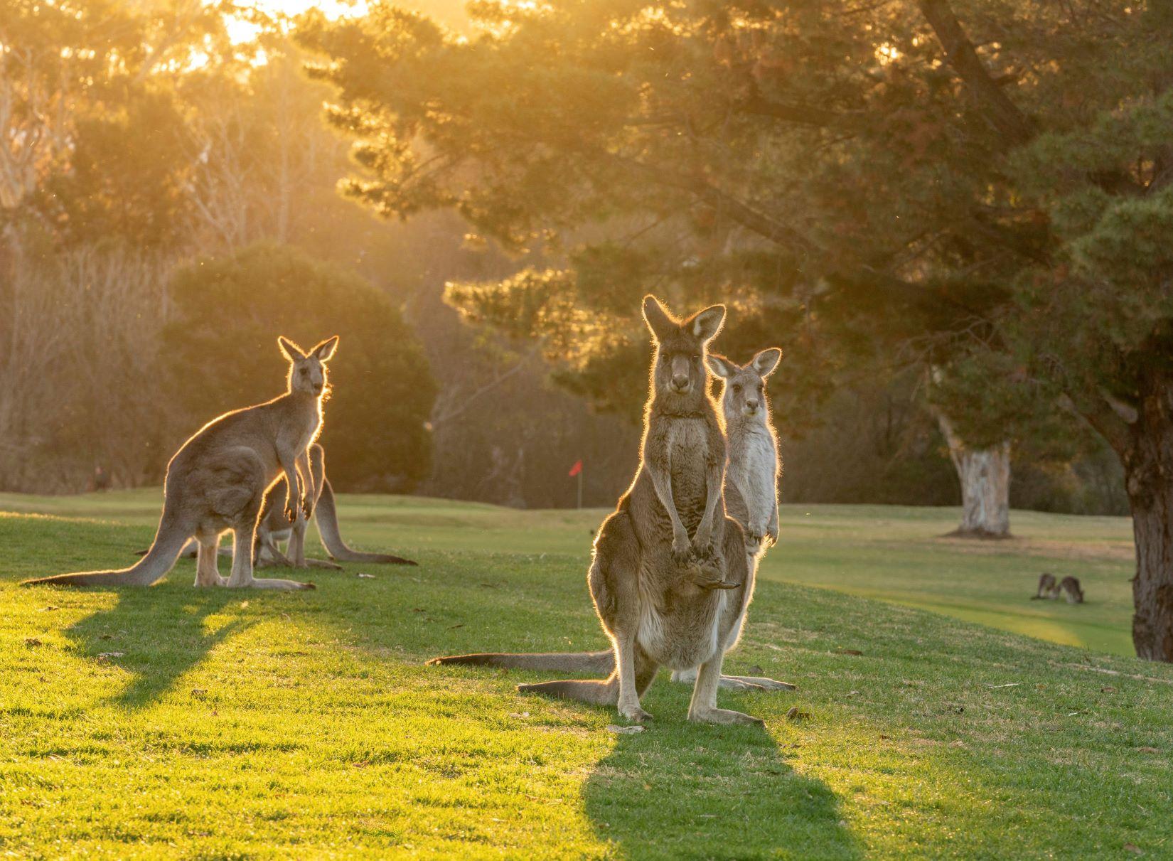 Where to see wildlife in Australia